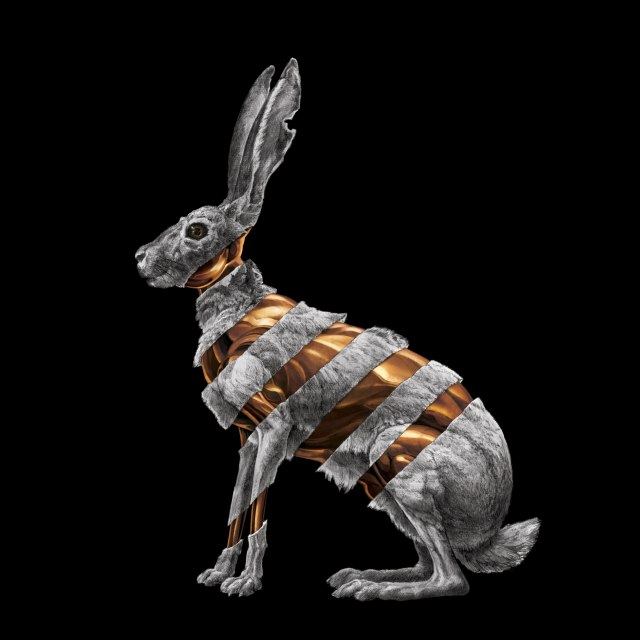 San-Fermin-Jackrabbit-Album-Cover