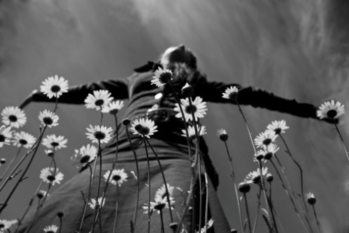 Top 5 Friday 5 Songs About Flowers LD