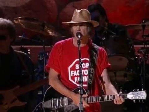 Neil Young Razor Love Top 5 Music Obsessions Song 5